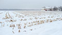 Winter Farm (Dalliance with Light (Andy Farmer)) Tags: barn corn cornstubble crops farm landscape nj princeton rows snow winter newjersey unitedstates