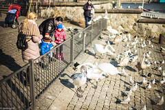 feed the beasts (paologmb) Tags: lake face birds animals kids swan eyes babies candid families zrich 50 individuals noctilux095 paologamba