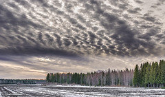 coming darkness (salas-3) Tags: trees sky snow clouds suomi finland woods nikon land fin d7100