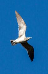 _AAD9634.jpg (Lake Worth) Tags: bird nature birds animal animals canon wings florida wildlife feathers wetlands everglades waterbirds southflorida 2xextender sigma120300f28dgoshsmsports
