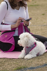 """Dogi yoga-1 • <a style=""""font-size:0.8em;"""" href=""""http://www.flickr.com/photos/25952605@N03/16190352757/"""" target=""""_blank"""">View on Flickr</a>"""