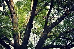 Un da soleado. (spawn5555) Tags: naturaleza sol mexico arbol atardecer photo plantas albero tarde aguascalientes fotografa