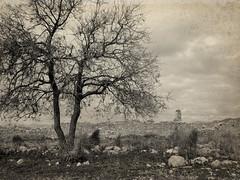 A wintery tree up in Tlos (VillaRhapsody) Tags: tree monochrome wall sepia ancient roman historical fethiye lykia lycian tlos preroman challengeyouwinner