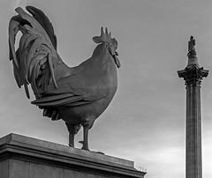 Old & New Sculptures - Trafalgar Square (BW)  (Pentax K-5II & 18-55mm Zoom) (markdbaynham) Tags: street city uk urban london k pentax zoom capital mount gb metropolis 1855mm dslr londonist apsc k5ii