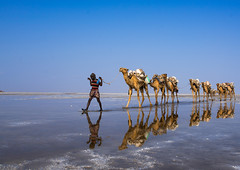 Afar tribe man camel caravans carrying salt blocks in the danakil depression, Afar region, Dallol, Ethiopia (Eric Lafforgue) Tags: world africa sky lake man color reflection tourism nature water beauty animal horizontal landscape outdoors solitude day desert adult labor horizon transport salt business camel saltlake serenity heat isolation caravan copyspace ethiopia load saline economy interest oneperson carrying hornofafrica afar eastafrica abyssinia saltmining fulllenght saltwork traveldestination 1people afarregion dallol danakildepression ahmedela ethio161696