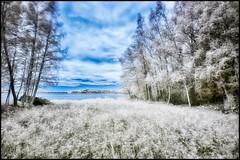 Infrared (Jonas Thomn) Tags: trees sky lake water grass clouds wind himmel filter infrared vatten trd vind sj moln r72 grs infrard infrartt