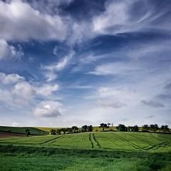 zuhause (bauingenieuse) Tags: summer sky green clouds landscape corn hessen sommer natur himmel wolken grn blau landschaft raps blauerhimmel getreide