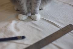 Management (kecotting) Tags: pet home animal pencil cat canon diy sewing help fabric curtains measure ruler homeimprovement measurement