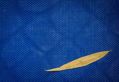 Reduced to a Sign (thewhitewolf72) Tags: weide symbol wind gelb blau blatt muster farben pflastersteine gartenstuhl minimalistisch reduziert herbstbote