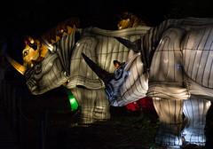 _DSC9536_2 (Elii D.) Tags: light fish flower animal night zoo monkey neon dragons lantern lampion dargon