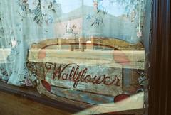 Wallflower (Georgie_grrl) Tags: toronto ontario window sign reflections restaurant curtain storefront pentaxk1000 wallflower rikenon12828mm