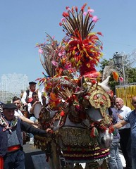Trecastagni (Ct) - I carretti siciliani alla Festa di Sant' Alfio (Luigi Strano) Tags: italy europe sicily catania sicilia carrettosiciliano trecastagni siciliancart
