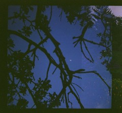 see me (lauraesgro) Tags: travel flowers sky moon tree film field silhouette evening lomo lomography exposure branch time double spaceship 120mm
