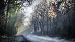 Retour en hiver (Bertrand Thifaine) Tags: soleil lumire hiver route arbres fort brume rayons matin humidit fracheur