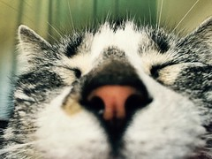 Close eyes (Lydia Muñoz) Tags: cosette cat kitty lovely closeeyes