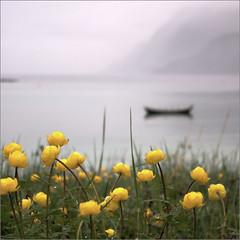 Globe flower - Trollius europaeus and a view to sea (Snemann) Tags: flowers sea water june norway colours troms coastlines shipsandboats smcpda1855mmf3556alwr pentaxk5