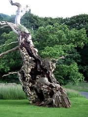 (P. Stubbs photo) Tags: foliage seeds leaf tree plant rootsshoots root shoot flower nature saveearth