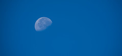 Moon over Santa Teresa County Park (randyherring) Tags: california park ca morning trees summer moon mountains nature grass us flora unitedstates outdoor hiking sanjose vegetation recreation santacruzmountains dryseason santateresacountypark santaclaracountyparks