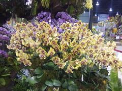 IMG_20160321_111447 (Sasha India) Tags: flowers orchid thailand orchids bangkok exibition apoc   apoc12