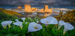Bandon Beach (Ryan_Buchanan) Tags: ocean flowers seascape beach oregon nikon calla lilies buchanan bandon pnw exposurescape
