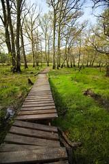 Scotland Day Three (Crazyideas95) Tags: trip scotland highlands sunny boardwalk loch lomond luss