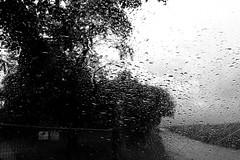 Still got the blues (Minolta X-700) (stefankamert) Tags: stefankamert blackandwhite blackwhite schwarzweis film analog ilford fp4 grain bw sw noir noiretblanc monochrome mono minolta x700 rokkor mdwrokkor wrokkor 35mm rain window stillgottheblues