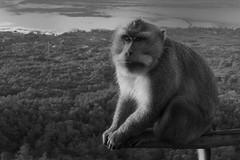 DSC02529 (Peripatete) Tags: bali mountains nature sunrise landscape volcano mount monkeys batur