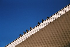 I11 (Pavel Kaplunov) Tags: animals market pigeons minsk doves komarovski