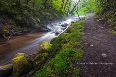 DSC_5033 Copy (David W. Behrens) Tags: michigan upperpeninsula cutriver river path mist fog water longexposure nikon spring 2016 lakemichigan rocks moss rapids