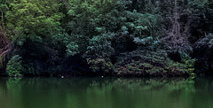 Mystic River (OrangeK7) Tags: tree green river nikon taiwan jungle lakeview mystic