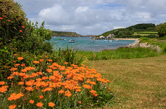 7D2L6662 (ndall) Tags: flowers landscape scilly tresco