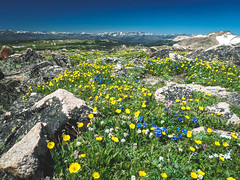 P6260425 (dicky c) Tags: nature nationalpark yellowstone em5ii omdem5ii