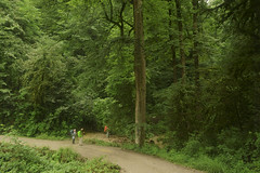 Lavij Jungle, Iran ($ALEH) Tags: road tree tourism nature tourist jungle ایران درخت طبیعت جنگل lavij توریست توریسم لاویج iranиране trekkingadventureclimbingmountaineeradventurerhikehikingtrektreker