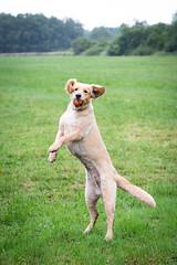10 Minuten ... (Martin Schmidt (www.schmaidt.de)) Tags: dog juni tiere martin menschen hund schmidt hunde tier dogphotography holle 2016 tierfotografie martinschmidt hundefotografie schmaidt schmaidtde