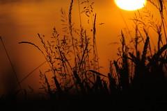 first flight in morning light (Xtraphoto) Tags: light sun sunrise licht fly flight sonne sonnenaufgang fliege