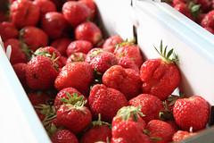 Frische Erdbeeren (blumenbiene) Tags: fruits garden strawberry strawberries jelly jam garten erdbeere erdbeeren frchte gelee marmelade fragaria erdbeermarmelade