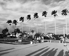 Amargosa - Bahia/Brasil (AmandaSaldanha) Tags: preto branco pb bw pretoebranco blackandwhite photography fotografia photo nature natureza amargosa bahia brasil landscape paisagem dark gothic coqueiros praa jardim