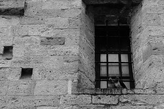 The love birds (-Aus-) Tags: italy white black love window birds wall facade italian couple pigeon pigeons