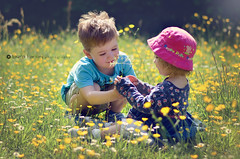 They are nice to each other sometimes! (Laura Hartley Photography) Tags: flowers summer hot love girl grass hat nikon toddler warm child sister brother siblings shallowdepthoffield childportrait nikon50mmf18g nikond5100