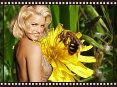 La bellezza.. (antonè) Tags: sardegna macro donna natura ape fiore palau insetto bellezza herecomesthesun afotando antonè pandaonflickr