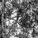 "Parque Estadual Acarai - O Dragao de Sao Francisco • <a style=""font-size:0.8em;"" href=""http://www.flickr.com/photos/39546249@N07/9702583481/"" target=""_blank"">View on Flickr</a>"