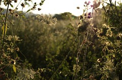 light (ΞSSΞ®®Ξ) Tags: italy backlight countryside pentax lazio k5 ξssξ®®ξ