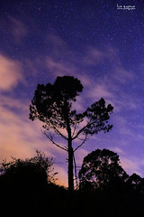 Alturas (www.luiszapico.com) Tags: arbol atardecer cielo nube