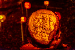 Old Man (Frank C. Grace (Trig Photography)) Tags: show park november autumn holiday art fall halloween spectacular pumpkin scary october artist unitedstates display jackolantern path kentucky ky awesome pumpkins seasonal illuminated spooky trail event louisville glowing artshow aroundtheworld pumpkinart iroquoispark laughingtree multimediaproduction reckner kosair trigphotography frankcgrace passionforpumpkins holidayartistry louisvillemetroparksfoundation organicgallery