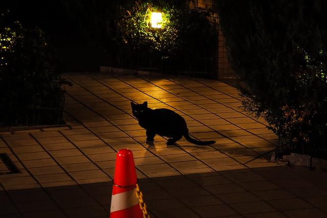 Today's Cat@2013-11-13