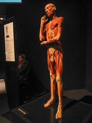 Human (pianoforte) Tags: dallas anatomy biology specimens plastination dallastx comparativeanatomy comparativezoology perotmuseum perotmuseumofnatureandscience animalinsideout