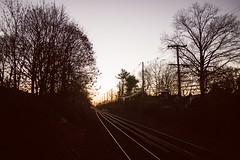 train tracks at dusk (Francesca Russell) Tags: traintracks mineola