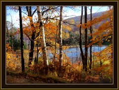 New Hampshire in October (edenseekr) Tags: autumn autumnfoliage fall pond newengland newhampshire birches digitallypainted