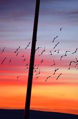 Head On (JamesPollock3) Tags: sunset red orange love beautiful modern contrast day angle bright flock january illusion backdrop sight split elegant hue 2014