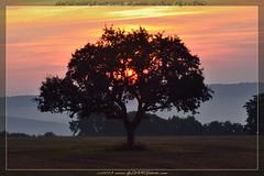 Poirier du Pays d'Othe / Pear tree of pays d'Othe (lgDAMSphoto) Tags: france bourgogne campagne arbre poirier aube champagneardenne nikkor70300 paysdothe nikond7000